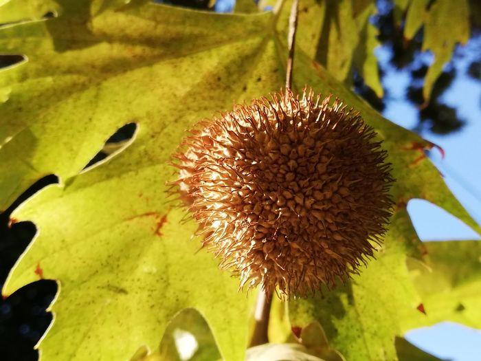 Close-up of flower on leaf