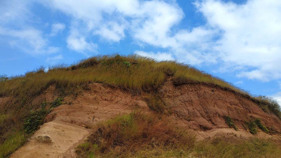 bukit Tree Sky Landscape Cloud - Sky Agricultural Field Cultivated Land Sand Dune Arid Landscape Growing Plantation