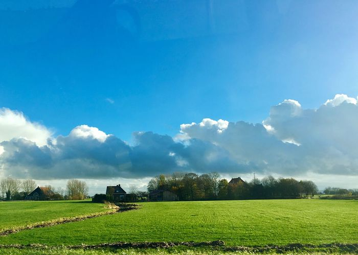 Rural Scene Field Sky Nature Farm Scenics Growth Landscape Light And Shadow Netherlands IPhoneography Grass Nature Morning Sky Blue Tree No People Outdoors Tranquil Scene Tranquility Cloud - Sky Beauty In Nature Day Grass