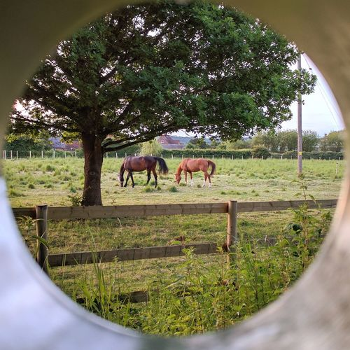 Tubular Vision No2 Domestic Animals Mammal Animal Themes Grass Nature Outdoors Home Made Prop Experimenting... Reflection Day No People Circle Horses Brown Horse Black Horse