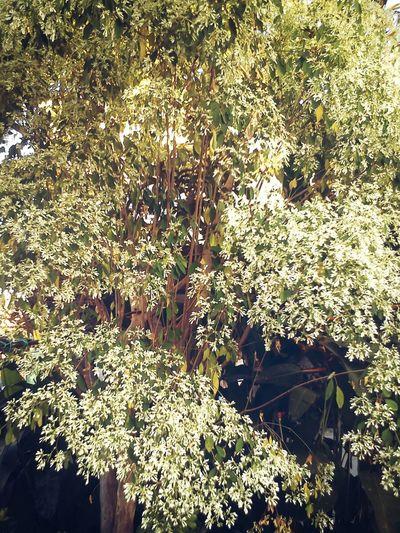 Cómo cuando encuentras un árbol hermoso en la casa de tu prima. Beautiful Day Nature Cousin's House ♡