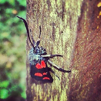 Can anyone tell me what this is? :) #bug #insect #nature #insect #wood #creature #love #instagood #tweegram #photooftheday #instagramtagsdotcom #instamood #me #summer #picoftheday #instagramhub #girl #instadaily #beautiful #bestoftheday #igdaily #instatags #webstagram #picstitch #nofilter  #happy #sun #follow #instagramers