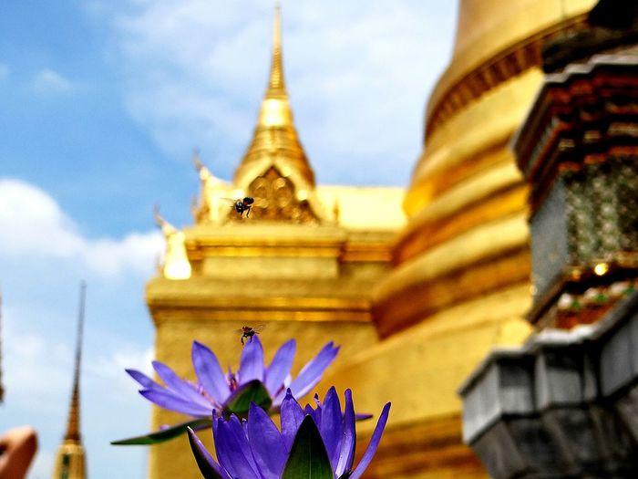 Temple Tempel Flowers Temple - Building Bangkok Blumen Bee And Flower Wat Phra Kaeo Palace Grand Palace Bangkok Thailand Bees Bienen