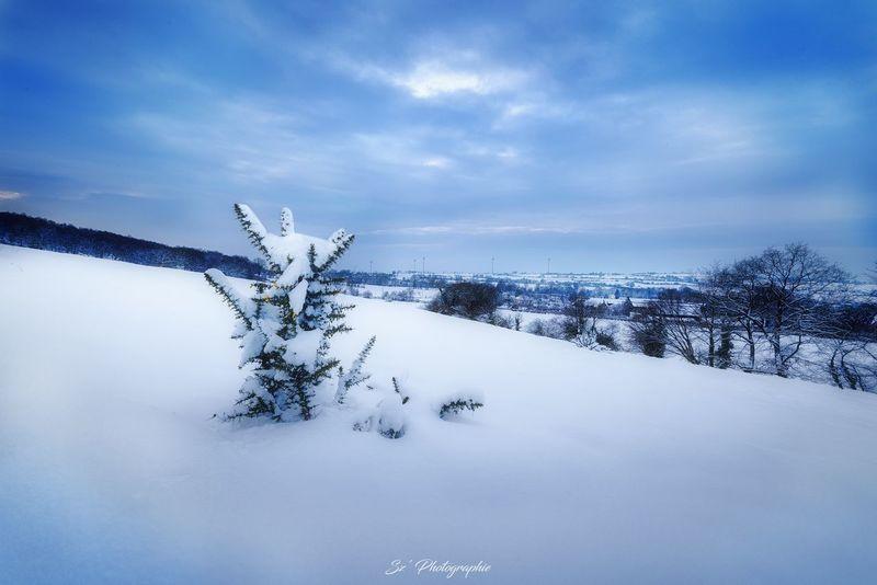 Snowy Landscape - Paysage enneigé www.szphotographie.com Calm Nice Atmosphere Ambiance Lighting Neige❄ Nikkor 18-105mm Nikon D810 Szphotographie Followme France 🇫🇷 Mayenne Fineart Art Trees Snow ❄ Landscape Nature