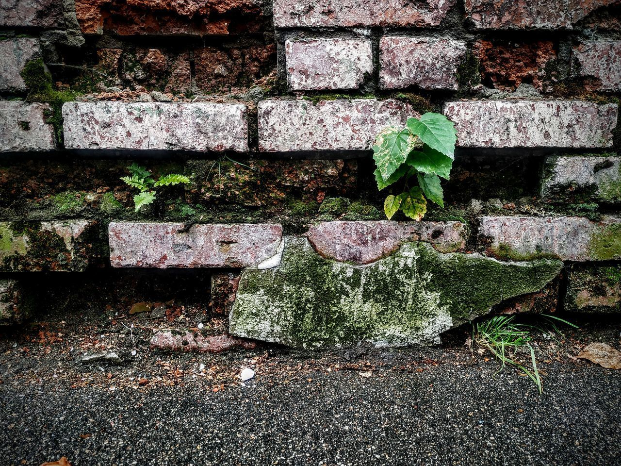 CLOSE-UP OF BRICK WALL WITH IVY