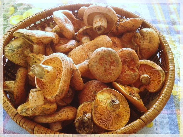 Basket with Lactarius deliciosus in sunlight. Mushrooms picking. Lactariusdeliciosus Lactarius Deliciosus Funghi Di Pino Basket Cestino Mushrooms Funghi Orange Color Delicious To Be Cooked Catched Autumn Smartphone Photography Mobilephotography S3 Mini Sunlight Close-up