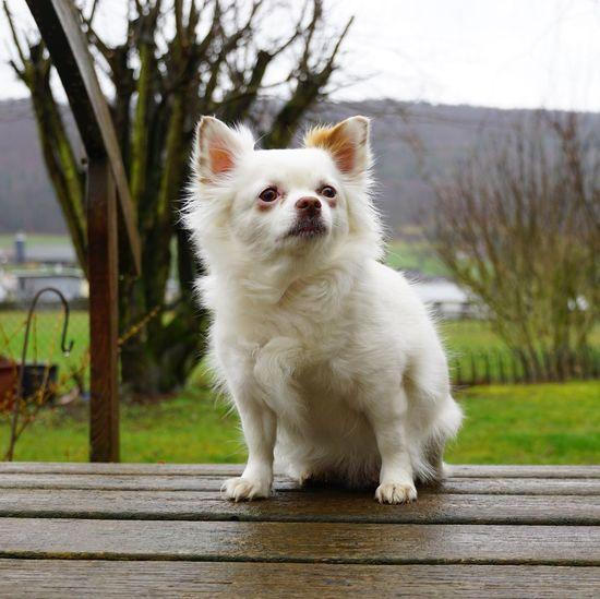 Dog Animal Themes One Animal Mammal Animal Pets Domestic Domestic Animals