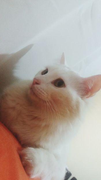 Domestic Cat Pets One Animal Animal Themes Domestic Animals Miau Petstagram Amor Animaisdomesticos Cats Of EyeEm Cat Lovers Cat♡ Cats Cat Felinos GatosFelices Gatosdeinstagram Gatos 😍 Gato😽 Gato Gatos