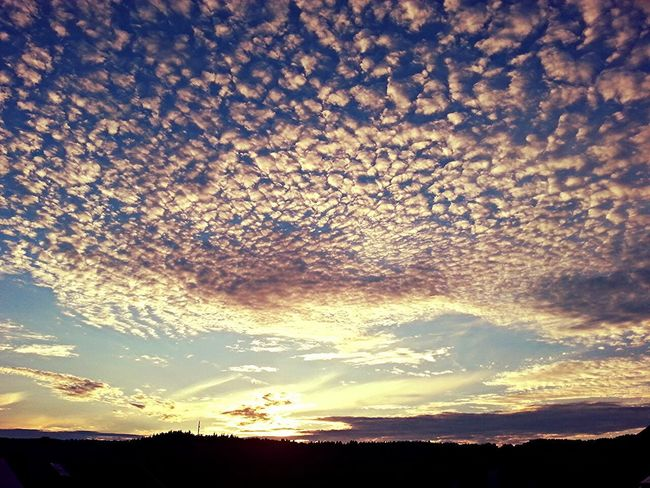 Sunset Summer Views Sunset_collection Sun Cloudporn Beautiful Colourful Sunset Skyporn Colourful Sky Sunset Silhouettes Clouds And Sky Sky And Clouds Beautiful Day Cloud Germany Summertime Summer End Of The Day Sky Smartphone Photography Smartphonephotography Sunlight Sunbeams Eyem Best Shots The Great Outdoors - 2017 EyeEm Awards Lost In The Landscape Perspectives On Nature