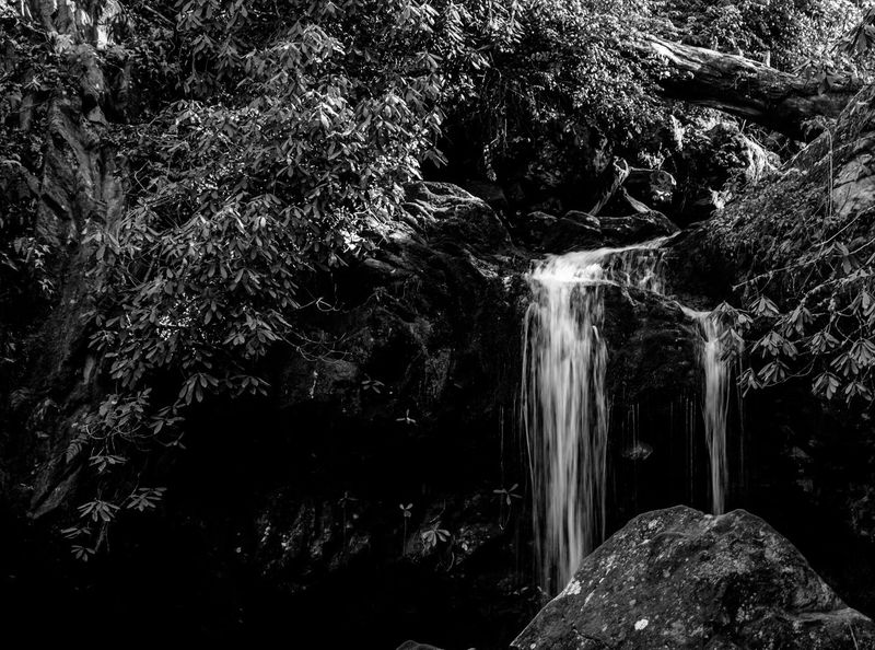 Grotto Falls Smoky Mountains Waterfall Water Flowing Water Motion Forest River Nature Beauty In Nature Long Exposure Rock - Object Tree Scenics No People Outdoors Tranquil Scene Tranquility Day Rapid Freshness Black&white Blackandwhite