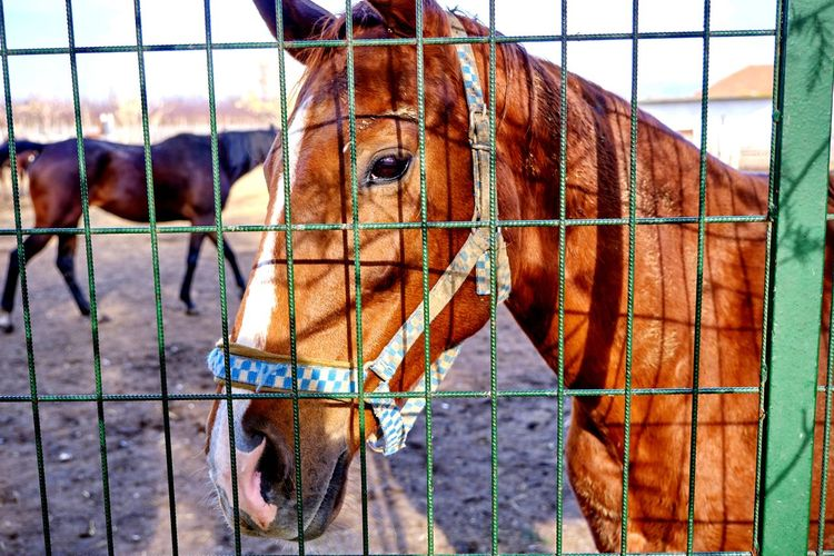 View of horse in ranch