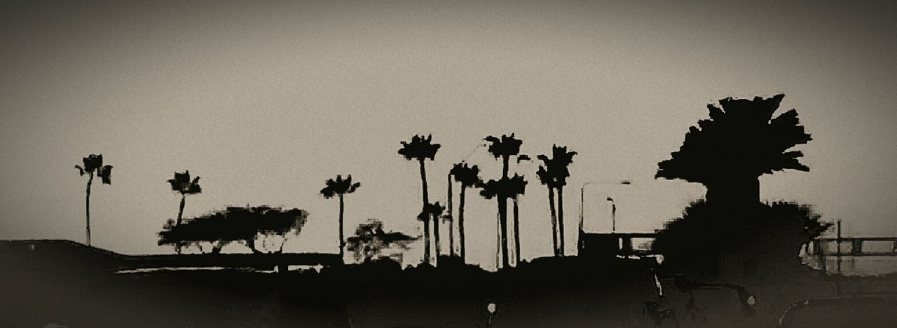 Silhouette Palm Tree Beauty In Nature Sky Outdoors Tree Low Angle View Cloud - Sky Edit Junkie Driving Black And White