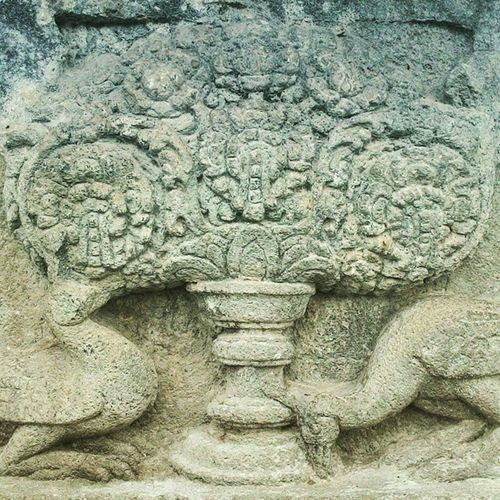 Prambanan temple panel in Central Java. The relief shows two bird-like animal doing something that looks like food hunting under a tree-like object that are said to be the Kalpataru or the Tree of Life. According to Yogyes.com, the relief are so detail and natural scientists believe the bird depicted are the yellow-crest parrot (cacatua sulphurea), the world's rarest and critically endangered species of coccatoo only found in remote Masakambing Island in the deep of Java sea Indonesiatravel IndonesiaOnly Travel2015 Archeology history southeastasia http://www.pisymposium.org/bonnie-zimmerman/