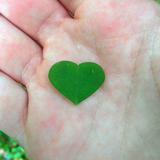 Beautiful Detail Heart Heart Shape Human Hand Ireland Love Mushroom Love Mushrooms Nature