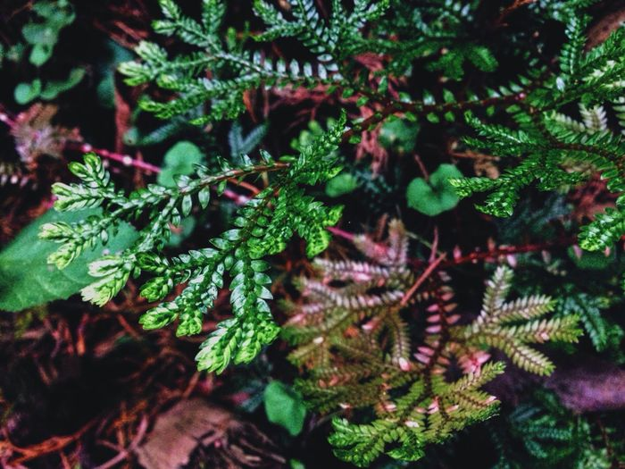 Flower Green Grass Ground Beauty Bosque De La Hoja Nature Pretty Road Trip Leave Forest Costa Rica