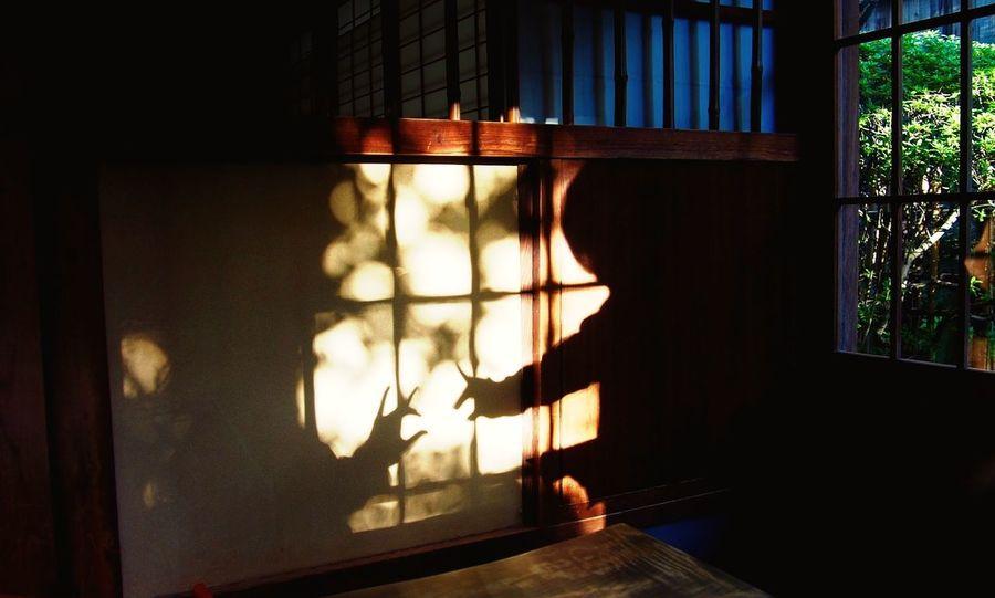 2015.3.25 こんこん Photo Shadow Light