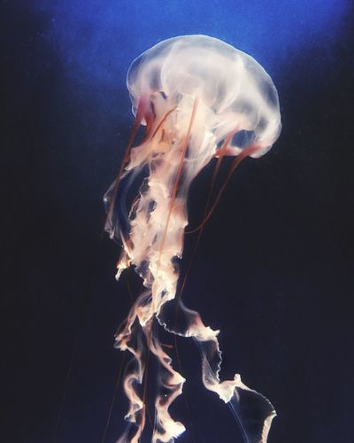 Monterey Bay Aquarium AMPt_community IPhoneography Mobile Photography Hdr_Collection Jellyfish Mextures Fragility Ocean