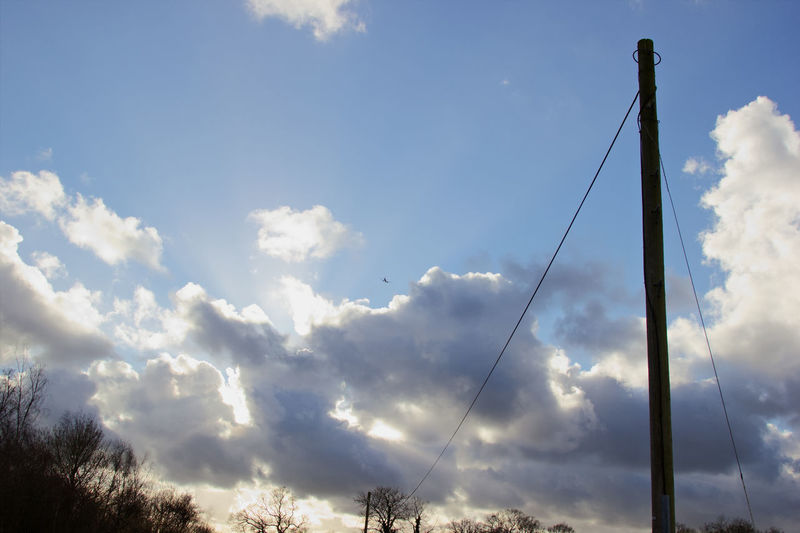 Tree Sky Cloud - Sky Telephone Line Plane Fly Telephone Pole Flight