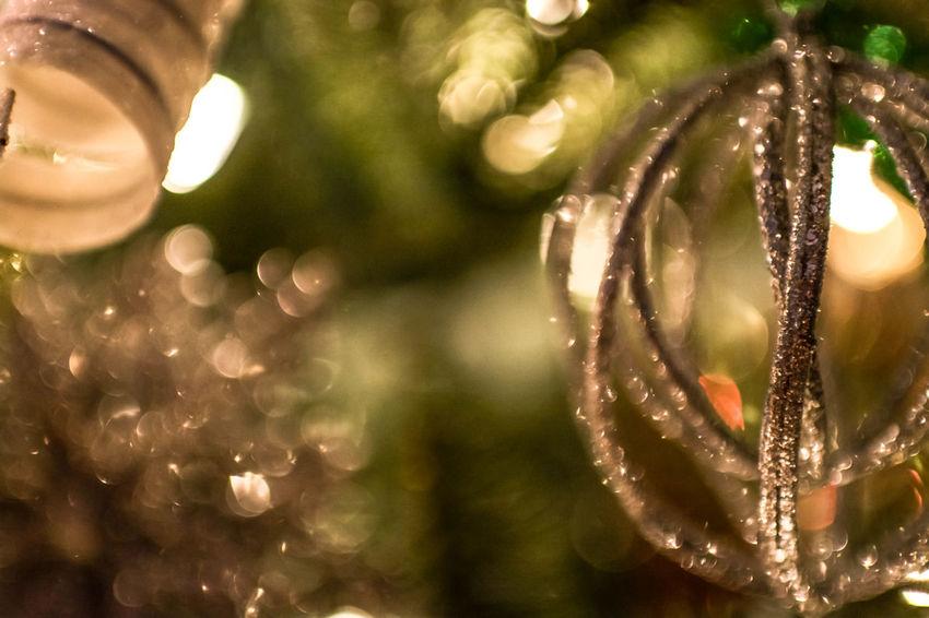 Christmas Tree Christmastime Christmas Decorations Christmas Lights Merry Christmas