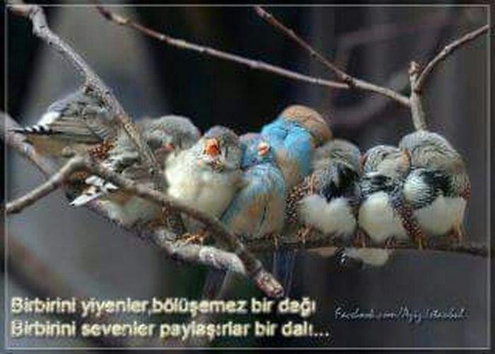 RePicture Giving Mehmet Gülezgin Malatya