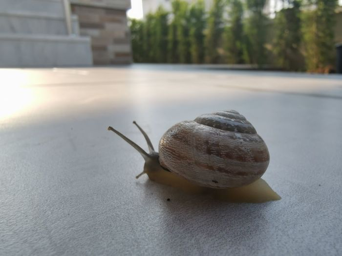 Close-up of snail