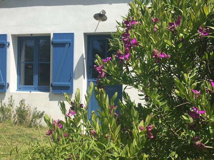 Purple flowering plants by window in yard of building