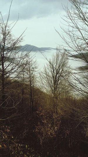 وحشی همچون دیلمان Nature Foggy Wintertime Gilan Deylaman Wild as Deylaman