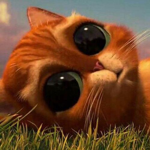 رمزيات_منوعه رمزياتي صور_رمزية Photo On A Health Kick First Eyeem Photo رمزياتBBM Photo♡ صور Cat