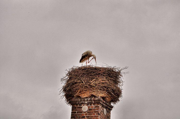 Animal Nest Animal Themes Bird Animals In The Wild Animal Wildlife Bird Nest Stork One Animal Wildlife Animal No People Nature White Stork Day EyeEmNewHere