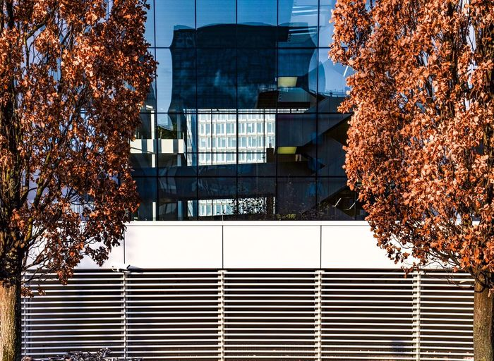 Low angle view of trees against building