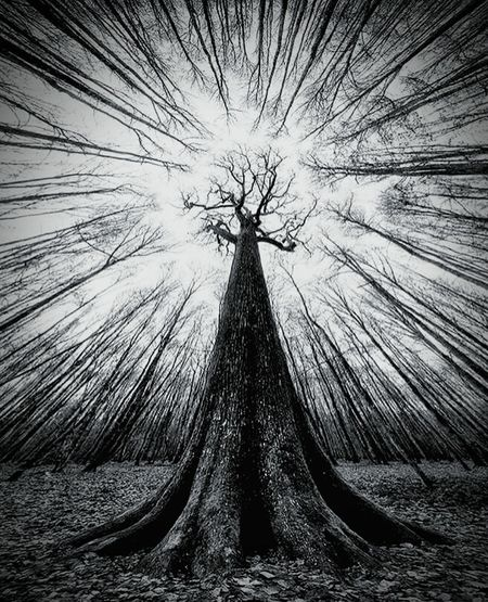 Y G D R A S I L K E T H E R Nature Tree Day Sky Outdoors Forest Blackandwhite Spooky Darkforest Creepy Ygdrasil Treeoflife Magick Occult