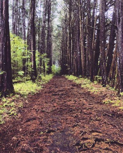 Bosque De La Hoja Costa Rica
