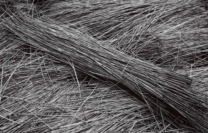 Full frame shot of grass