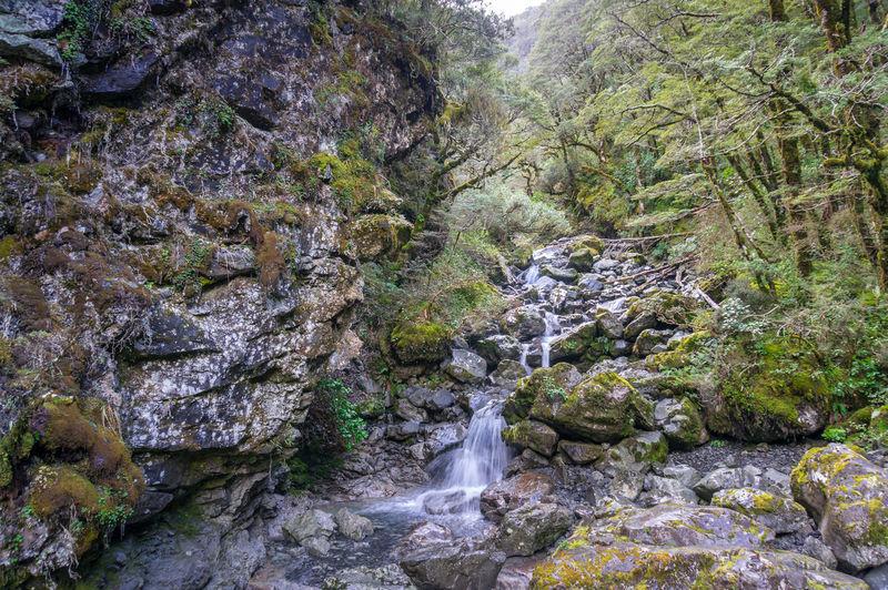 Stream River