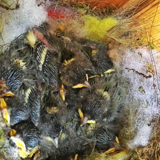 Oxeye IPhoneography Wildlife & Nature Littlebird