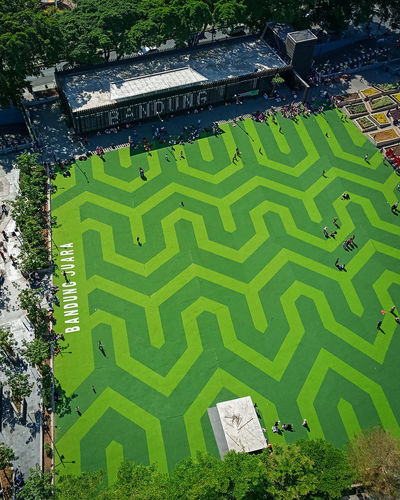High angle view of plants and trees on field