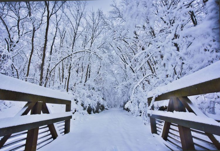 Winter Snow Cold Temperature Tree Nature Wood - Material White Color Scenics - Nature No People Tranquility Beauty In Nature Tranquil Scene Frozen Bare Tree Covering Plant Architecture Day Direction Outdoors Snowcapped Mountain