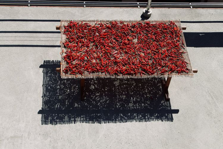 High angle view of red chili peppers drying on camp bed