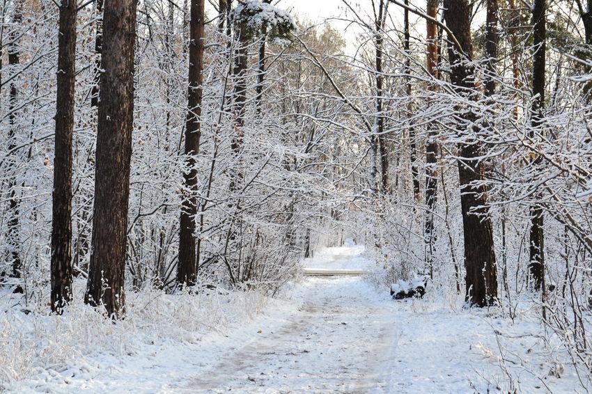 Snow November. Nikon Russia Morning Nature пейзаж Autumn Landscape Path Branch Road Alley Walkway Frost утро снег Дорога мороз Тропа осень Tree Snow Forest