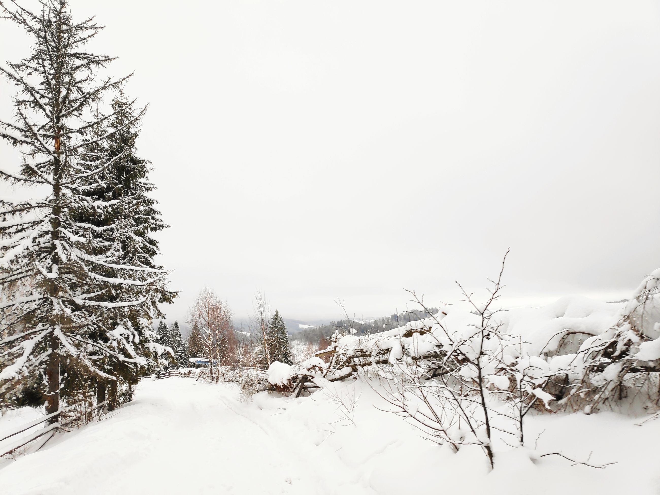 winter, snow, cold temperature, tree, plant, sky, beauty in nature, tranquility, covering, tranquil scene, scenics - nature, nature, no people, white color, land, clear sky, environment, day, non-urban scene, outdoors, snowcapped mountain, coniferous tree