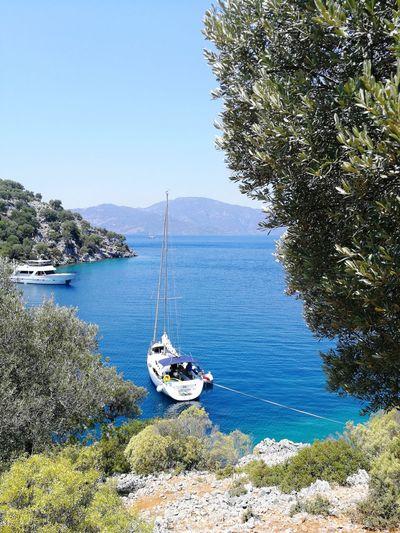 Tree Water Nautical Vessel Clear Sky Sea Mast Sailboat Moored Blue Sailing