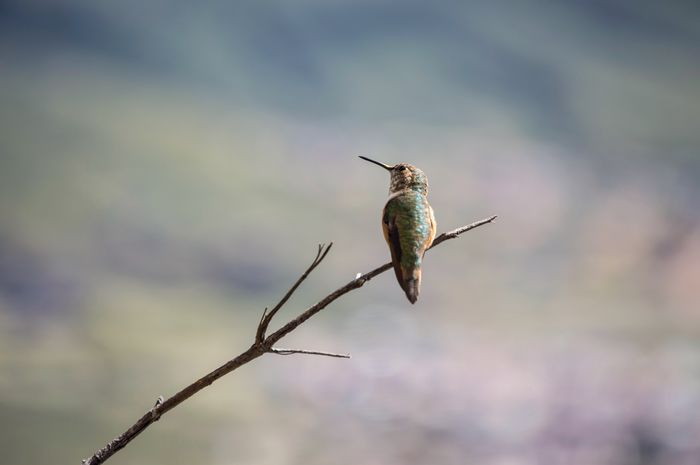 One Animal Animal Themes Animals In The Wild Focus On Foreground Animal Wildlife Day Insect No People Outdoors Perching Nature Close-up Sky