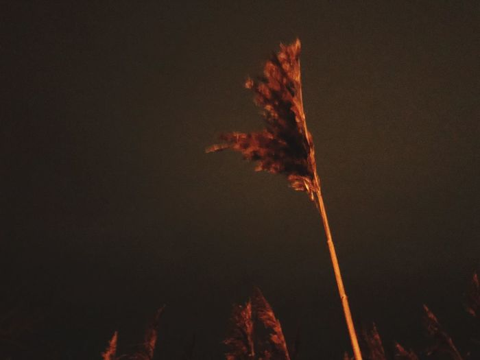 Night Low Angle View Sky Nature No People Motion Firework Outdoors Tree Event Celebration Illuminated Firework Display Plant Beauty In Nature Orange Color Exploding Growth Blurred Motion Copy Space
