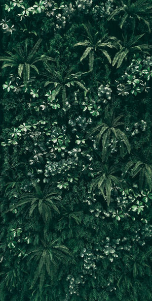 Dark Darktone Rain Rainning Backgrounds Beauty In Nature Botany Close-up Day Foliage Forest Freshness Full Frame Green Color Growth High Angle View Leaf Lush Foliage Nature Outdoors Plant Plant Part Season  Summer Tree