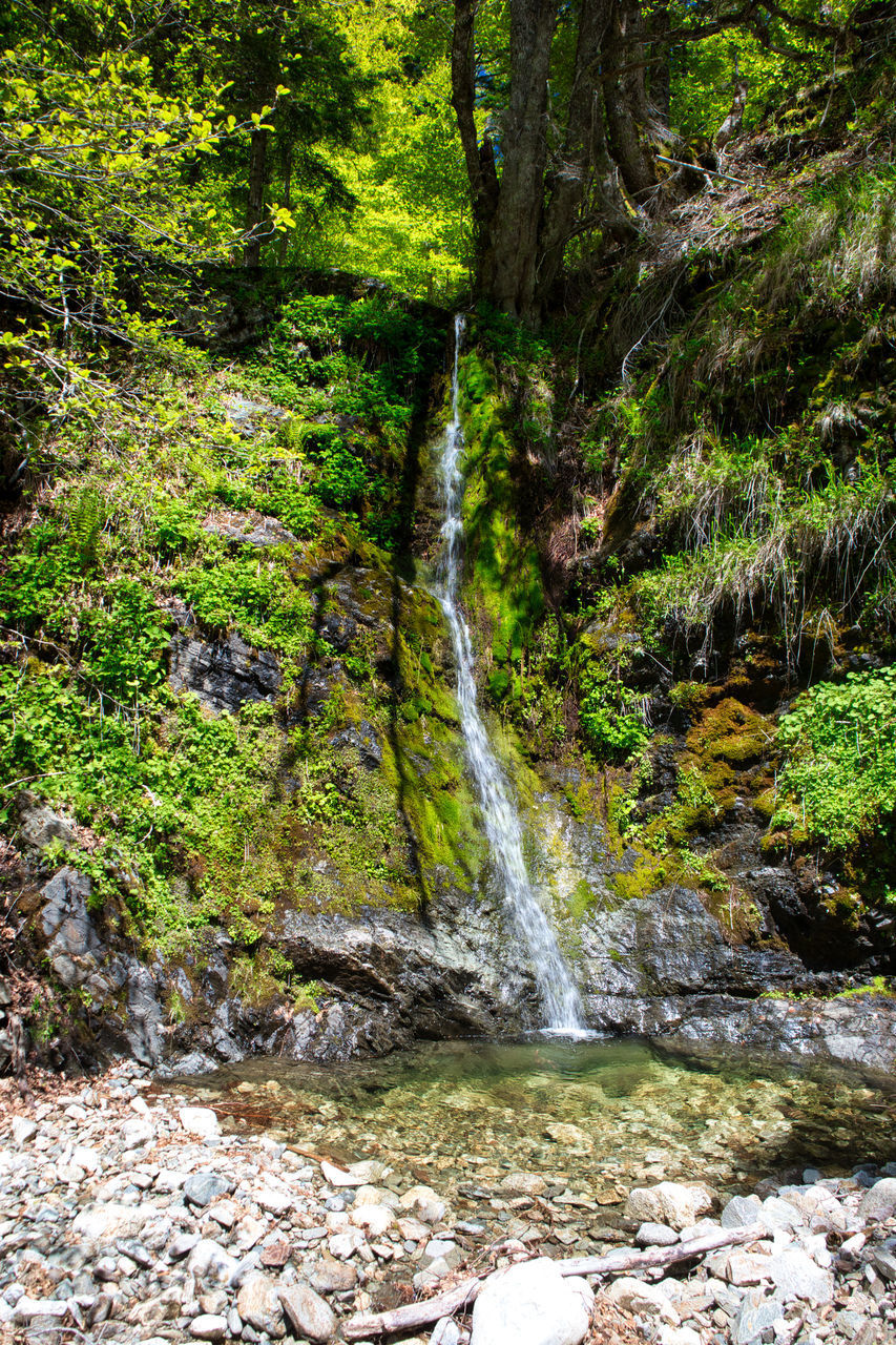 forest, water, tree, flowing water, land, scenics - nature, beauty in nature, motion, plant, rock, nature, solid, long exposure, environment, waterfall, rock - object, no people, flowing, day, outdoors, stream - flowing water, woodland, rainforest, power in nature, falling water