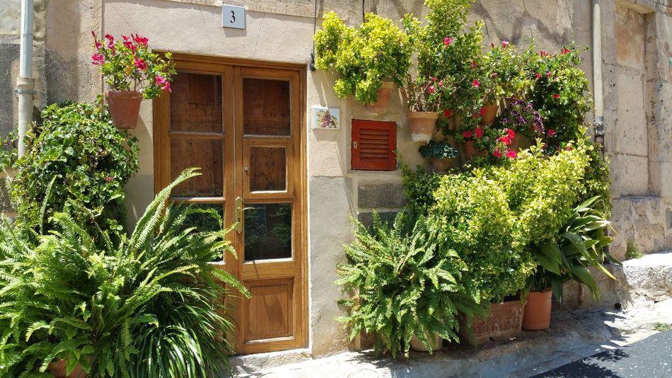 Blumentöpfe Door Flower Flowers Hauseingang Mallorca No People Pflanzen Plant Plants Potted Plant Spanien Tür Wall Wohnungseingang