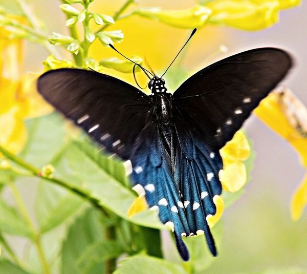 EyeEm Nature Lover Nature Butterfly Flight