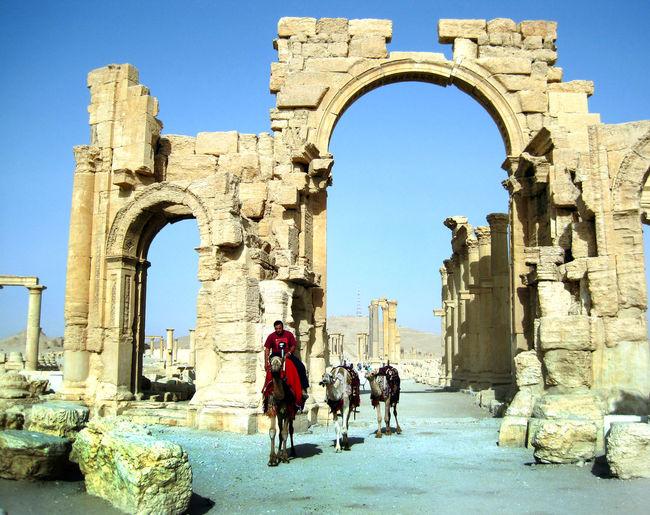 Ancient Ancient City Ancient World History Horse Horses Old Ruin Palmyra Ruins Travel Destinations Travel Photography