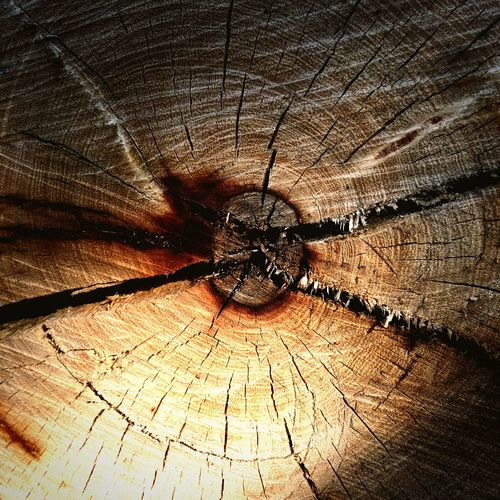 Tree Rings Tree Section Tree Section Close Up Radiating Lines Heart Of The Tree Color Palette
