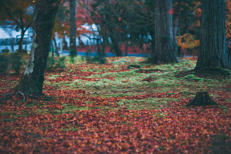 flooding colors Outdoors Nature Beauty In Nature Peace And Quiet Autumn Tranquility Autumn Color EyeEm Nature Lover EyeEm Gallery Getting Inspired Color Of Life Nature Sound Of Life Forest EyeEm Best Shots Japan Scenery No People